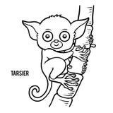 Coloring book, Tarsier. Coloring book for children, Tarsier royalty free illustration