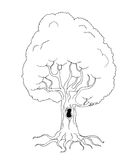 Coloring book tree Royalty Free Stock Image