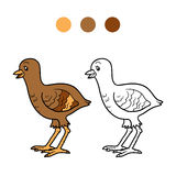 Coloring book (turkey chick) Royalty Free Stock Photography