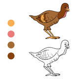 Coloring book (turkey chick) Stock Images
