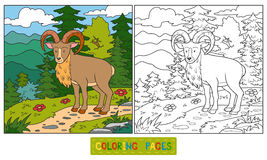 Coloring book (urial) Royalty Free Stock Photos