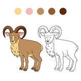 Coloring book (urial) Royalty Free Stock Images