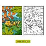 Coloring book, Xenosaurus Royalty Free Stock Photos