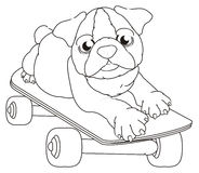 Coloring bulldog on skate Royalty Free Stock Photo