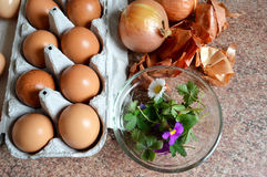 Coloring Easter eggs with onion. Peel Royalty Free Stock Images