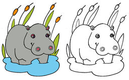 Coloring hippo COLOR and BW Royalty Free Stock Photography