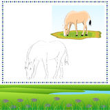 Coloring Horse royalty free stock images