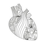 Coloring illustration of heart. Stock Photography