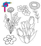 Coloring image flowers Royalty Free Stock Photo