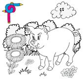 Coloring image pig Royalty Free Stock Photos