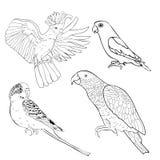 Coloring Jaco, Lovebird, wavy parrot kakadu set. Vector illustra Stock Photos