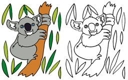 Coloring Koala Stock Photos