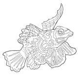 Coloring Mandarin fish is Chinese perch. vector illustration royalty free illustration