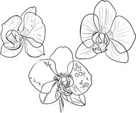 Coloring with orchids Royalty Free Stock Photography