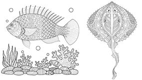 Coloring page for adult colouring book. Underwater world with stingray shoal, tropical fishes and ocean plants. Antistress freehan. D sketch drawing with doodle stock illustration