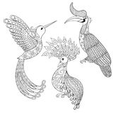 Coloring page with Bird Rhinoceros, Hummingbird and exotic bird, Royalty Free Stock Image