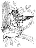 Coloring page with birds Royalty Free Stock Images