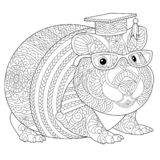 Zentangle guinea pig coloring page. Coloring page. Coloring book. Anti stress colouring picture with hamster or guinea pig. Freehand sketch drawing with doodle vector illustration