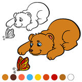 Coloring page. Color me: bear. Little cute baby bear. Coloring page. Color me: bear. Little cute baby bear looks at the butterfly Stock Photo