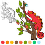 Coloring page. Color me: chameleon. Little cute red  Stock Photos