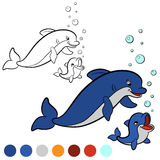 Coloring page. Color me: dolphin. Mother dolphin swims with her Stock Photos