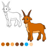Coloring page. Color me: goat. Billy goat. Stock Photography