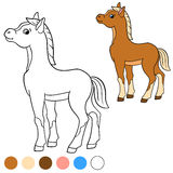 Coloring page. Color me: horse. Little cute foal. Royalty Free Stock Images