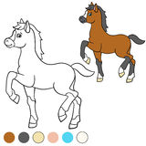 Coloring page. Color me: horse. Little cute foal. Stock Images