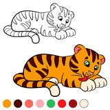 Coloring page. Color me: tiger. Little cute baby tiger. Coloring page. Color me: tiger. Little cute baby tiger cleans himself Stock Images