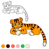 Coloring page. Color me: tiger. Little cute baby tiger Royalty Free Stock Photography