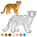 Coloring page with colors. Cute spotted jaguar smiles. Royalty Free Stock Photo