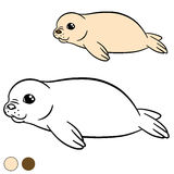 Coloring page with colors. Little cute white-coated baby fur seal. Smiles Stock Photos