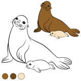 Coloring page with colors. Mother fur seal with her baby. Royalty Free Stock Image