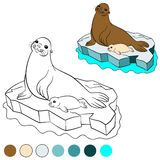 Coloring page with colors. Mother fur seal with her baby. Stock Image