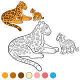 Coloring page with colors. Mother jaguar with her cub. Royalty Free Stock Image