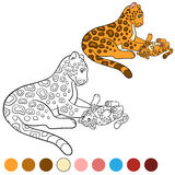 Coloring page with colors. Mother jaguar with her cub. Stock Image