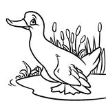 Coloring page duck contour illustration Stock Photo