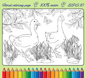 Coloring page with gooses Royalty Free Stock Photos