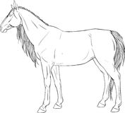 Coloring page with horse Royalty Free Stock Photos