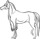 Coloring page with horse Stock Images