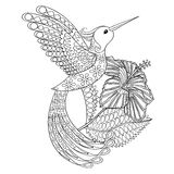 Coloring page with Hummingbird in hibiskus, zentangle Stock Image