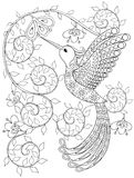 Coloring page with Hummingbird, zentangle flying bird  for adult. Coloring books or tattoos with high details  on white background. Vector monochrome sketch of Stock Image