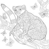 Zentangle stylized lemur and butterflies. Coloring page of madagascar lemur surrounded by butterflies. Freehand sketch drawing for adult antistress coloring book vector illustration