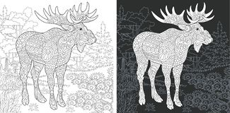 Coloring page with moose. Coloring Page. Coloring Book. Colouring picture with Moose drawn in zentangle style. Antistress freehand sketch drawing. Vector vector illustration