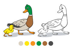 Coloring page. Mother duck and duckling. Stock Images