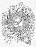 Coloring page with a nest and birds eggs Stock Image