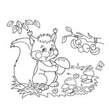 Coloring Page Outline Of cartoon squirrel with mushrooms in the meadow with butterflies. Coloring book for kids Royalty Free Stock Image