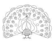 Coloring page outline of funny peafowl Stock Photos