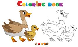 Free Coloring Page Outline Of Cartoon Duck With Duckling. Farm Animals. Coloring Book For Kids Royalty Free Stock Images - 169835879