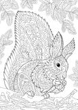 Zentangle stylized squirrel Stock Images